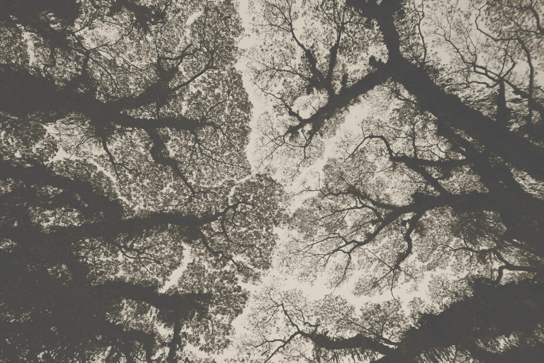 Tree-Territories