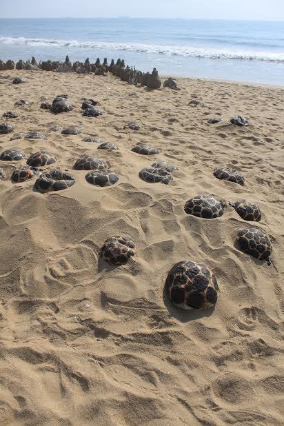 Turtle Project, Jacob Jebaraj